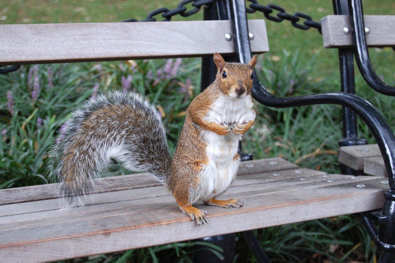 Beautiful stock photos of squirrel, Animal Themes, Animal Wildlife, Animals In The Wild, Bench