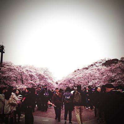 娘からの写メみやげ。素敵。 Cherryblossom Tokyo