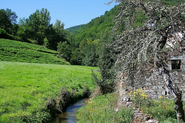 Santiagodecompostela CaminodeSantiago Galicia, Spain Galizia SPAIN El Camino De Santiago Galicia BuenCamino Nature Colors