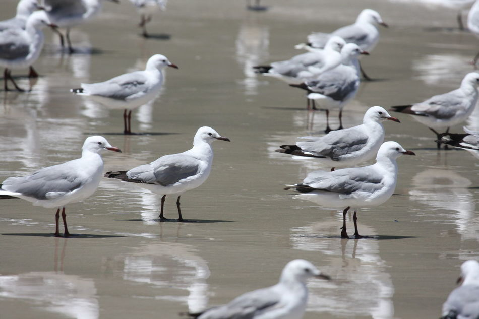 Animal Themes Animal Wildlife Animals In The Wild Bird Day Facing One Direction Flock Of Birds Flock Of Seagulls Large Group Of Animals Nature No People Outdoors Together Water