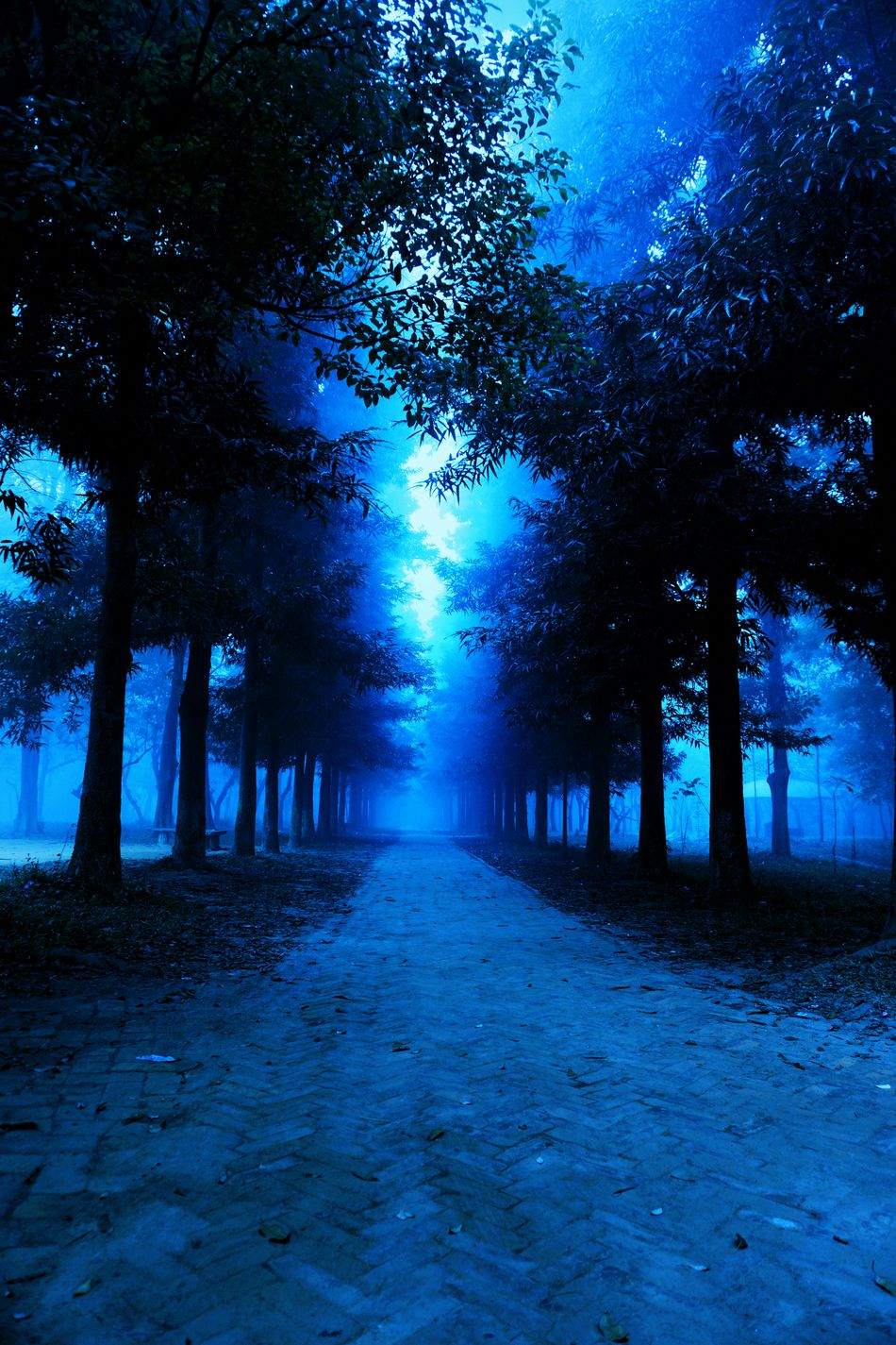 SONY ILCE6000 Photography. Sci-fi Inspired Extraterrestrial Environment Shades Of Blue Pathway In The Forest Q Imagination Shadows Creativity Fine Art Conceptual Layers Negetive Space Creative Editing Light And Shadow Mysteryland Conceptual Photography  Imagination Adventures Adventures Beyond The Ultraworld Mysterious Landscape Mystery Forest Trees On Both Sides Of The Track Foggy Forest Landscape With Whitewall Botanical Garden, Dhaka, Bangladesh