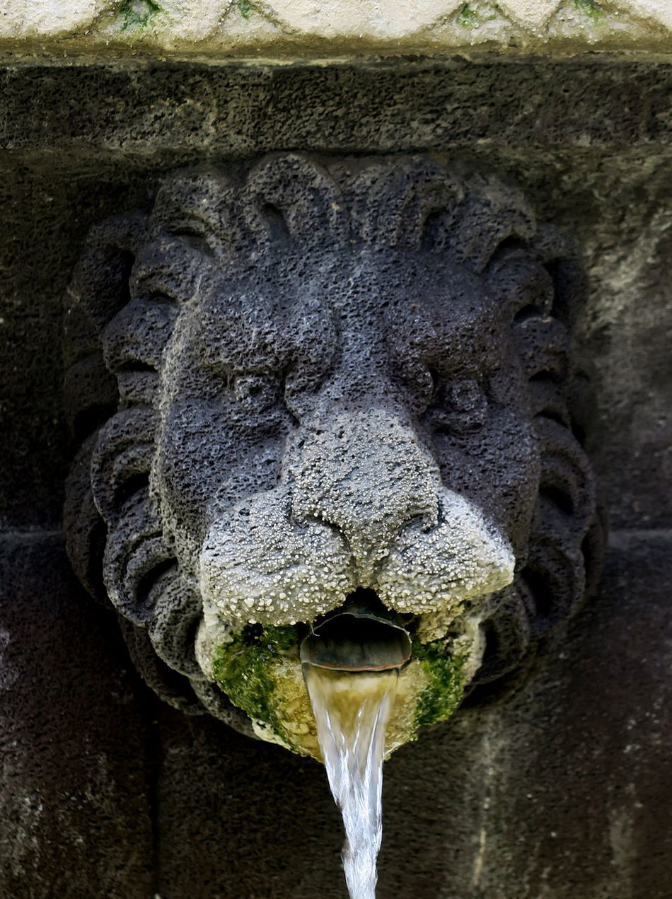 An old King, roaring Grey and Green Animal Head  Animal Themes Bearded Close-up Day Fountain who's petrified ?! Fountain_collection Fountains Lion Lion Head Lion Head Wall Fountain Lion King  Mane Outdoors Paris Petrified Piercing Eyes Place De Vosges Portrait Roaring Sculpture Statue Textured  Water Running