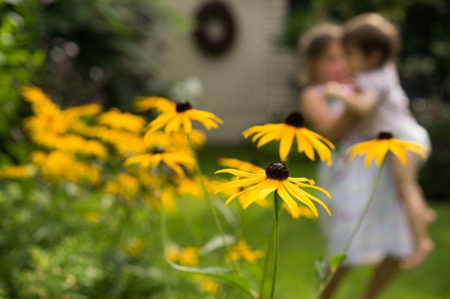 Beauty In Nature Blooming Blossom Botany Children Playing Close-up Daisy Flower Flower Head Focus On Foreground Fragility Freshness Garden Garden Photography Growth In Bloom Insect Nature Outdoors Petal Plant Springtime Stem Tranquility Yellow