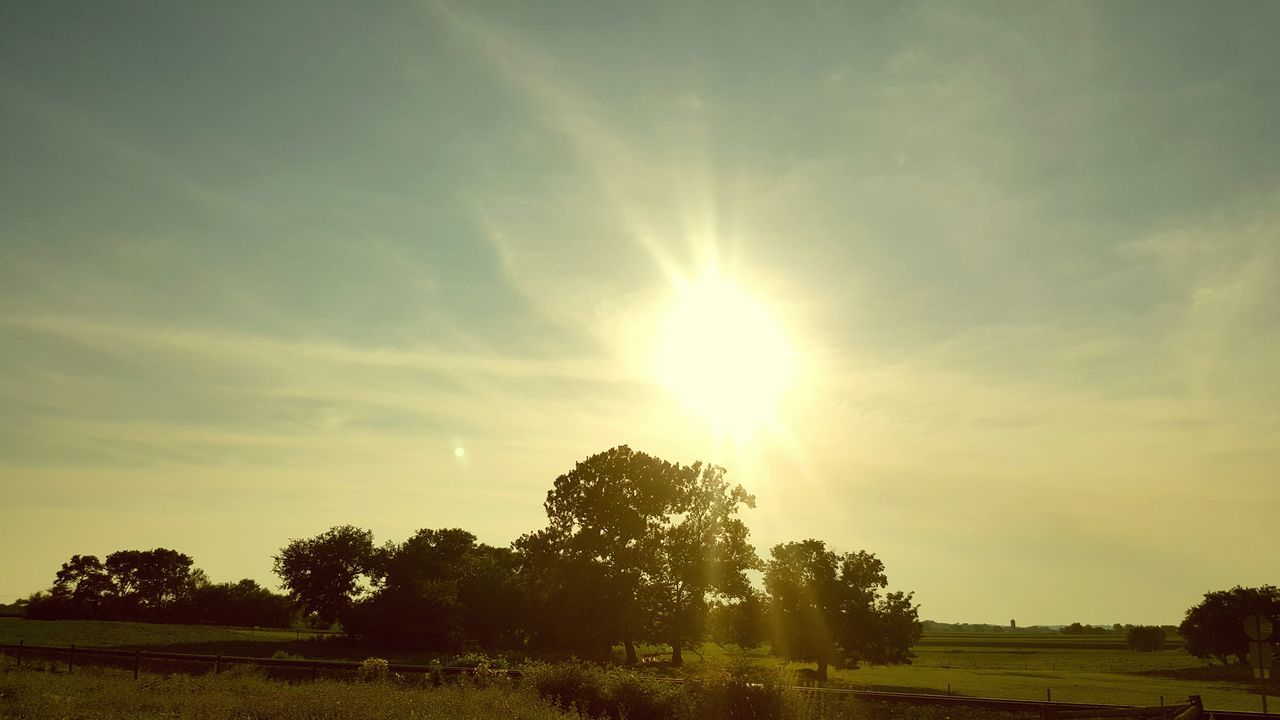 Fields At Rest Sunlight Sunlight Sunset Sun Tree Nature Sky Sunbeam No People Outdoors Beauty In Nature Landscape Day