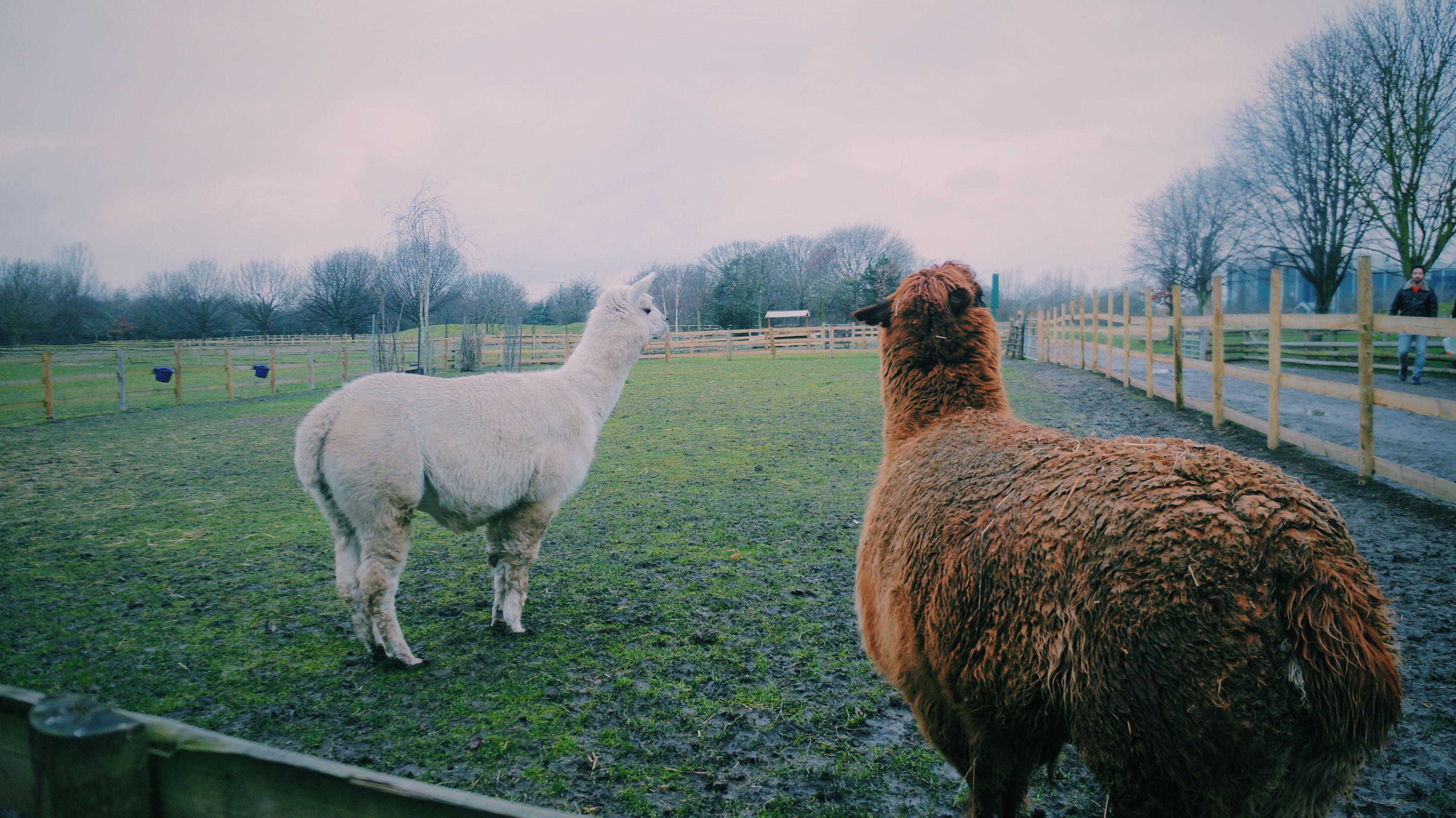 Mudchute Farm Farm Grassmudhorse Grass Animals Beautiful