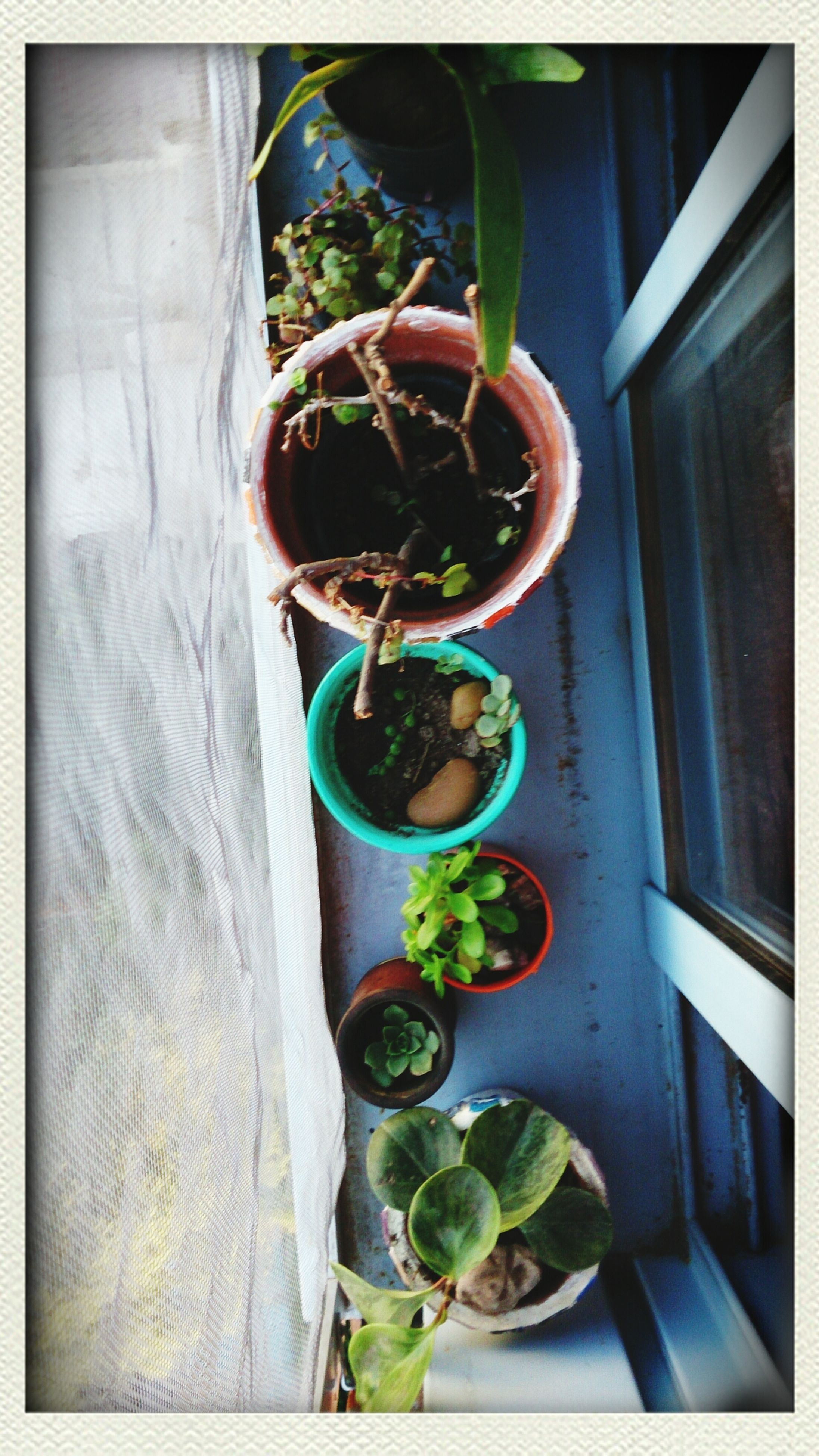 indoors, potted plant, freshness, still life, table, food and drink, healthy eating, food, leaf, home interior, vegetable, green color, close-up, plant, auto post production filter, no people, transfer print, high angle view, wood - material, green