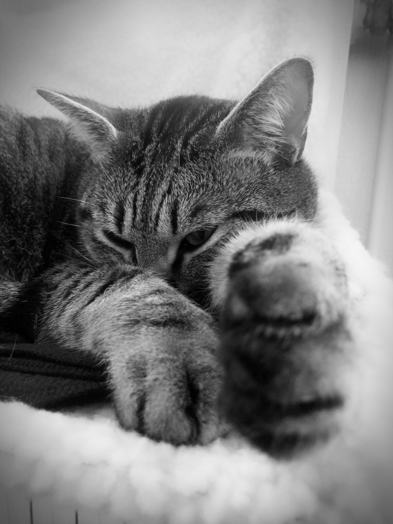 Domestic Animals Domestic Cat Pets Animal Themes Cat♡ Mycat Animal_collection Mycat♥ Mypetisbetterthanyours Black And White