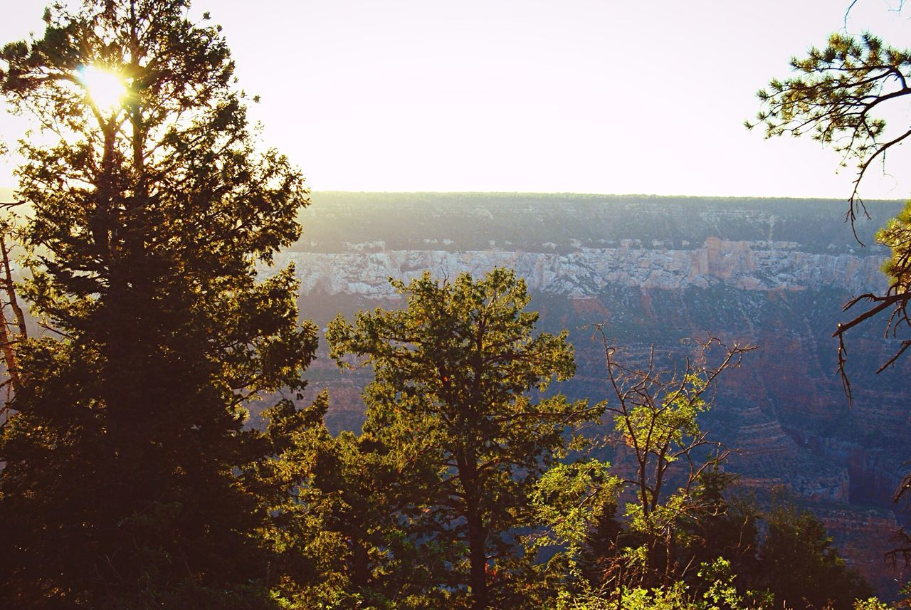 Beautiful stock photos of grand canyon, Beauty In Nature, Day, Growing, Growth