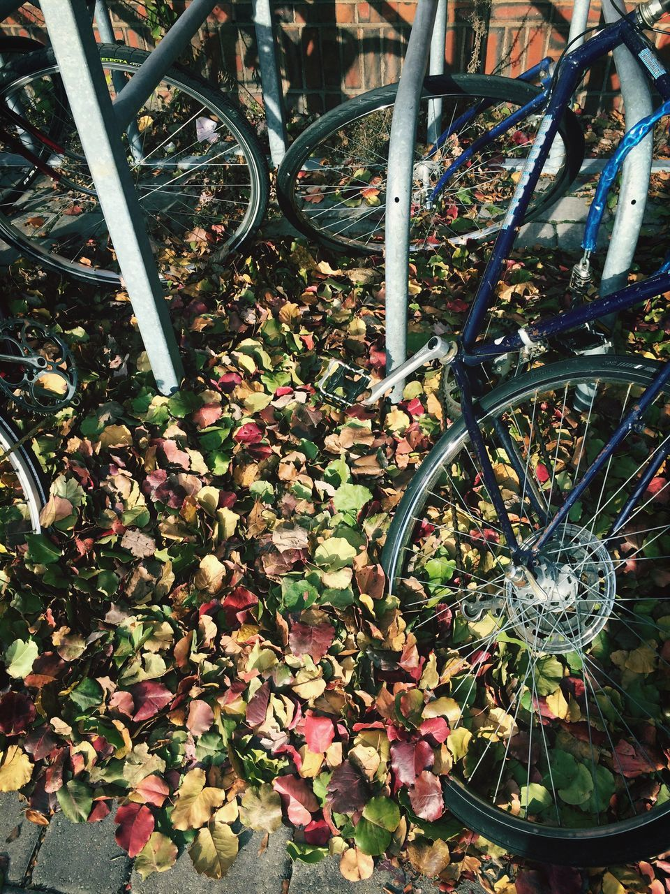 High Angle View Of Bicycles Parked On Fallen Autumn Leaves