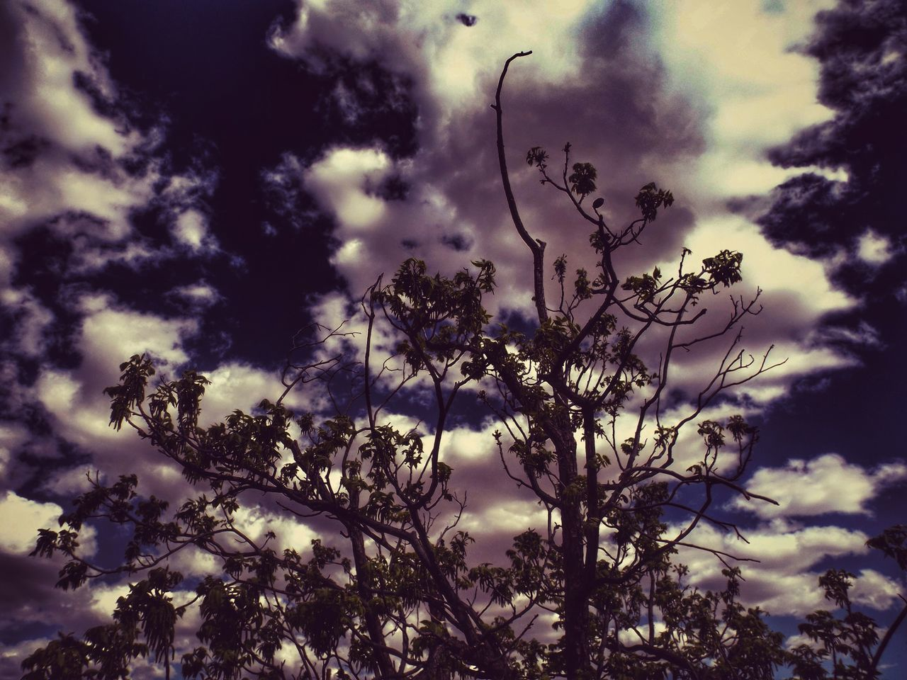 sky, tree, nature, low angle view, cloud - sky, beauty in nature, outdoors, silhouette, no people, branch, day, growth, bird, animal themes