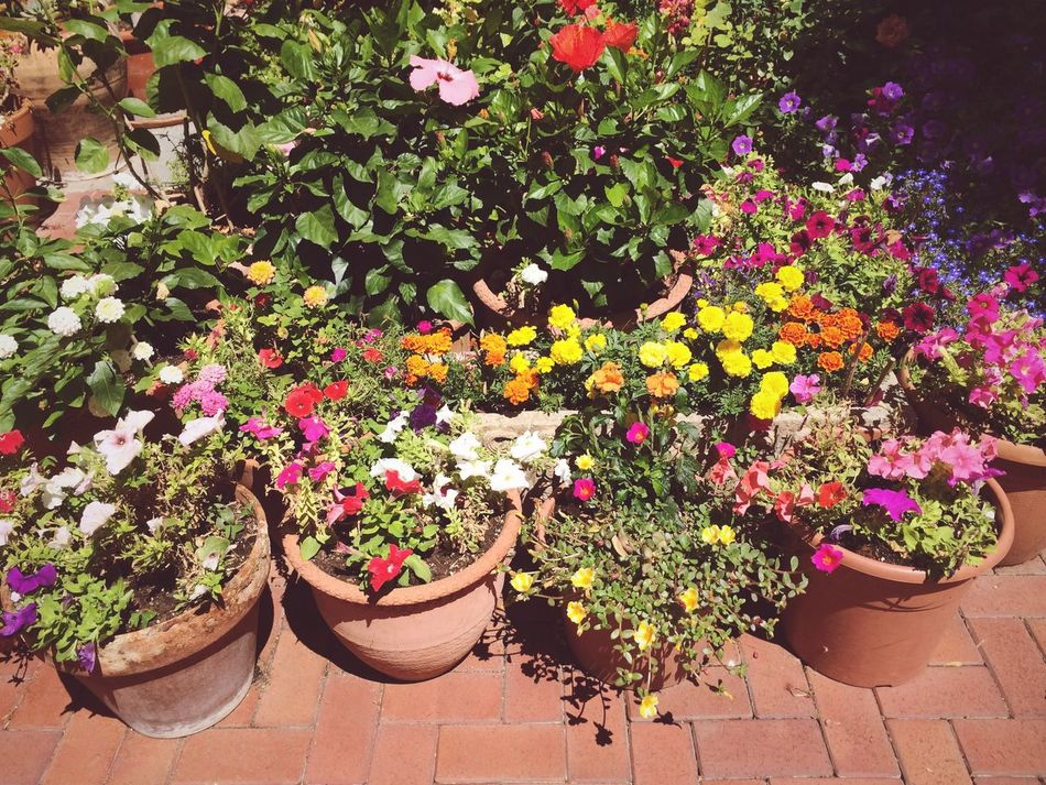 Nature On Your Doorstep at Sarria. Barcelona. Flowers Plants
