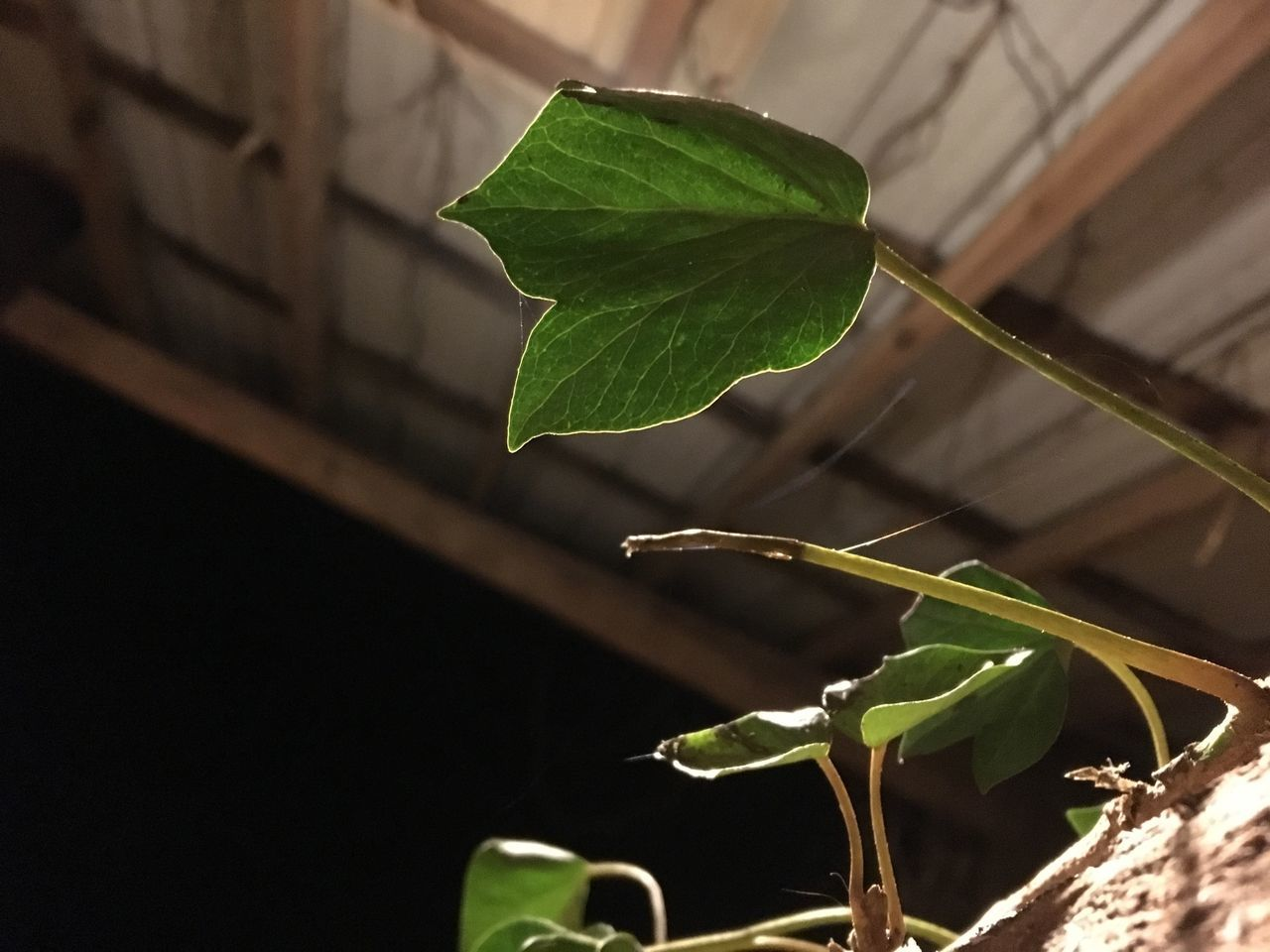 Leaf Green Color Growth Plant Nature Close-up No People Freshness Fragility Beauty In Nature Day Outdoors Water Woodworking Low Angle View Fresh On Eyeem  EyeEmNewHere IPhoneography Silhouette No Filter, No Edit, Just Photography