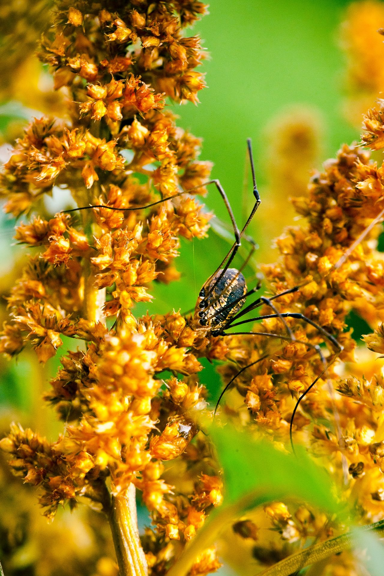 Beautiful stock photos of spider's, Animal Themes, Animals In The Wild, Canada, Close-Up