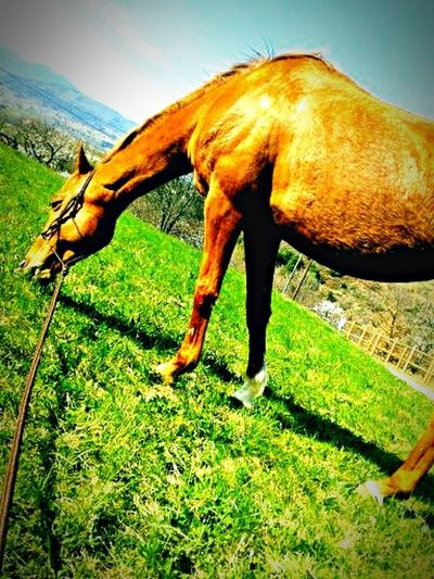 Horse Relaxing Sun