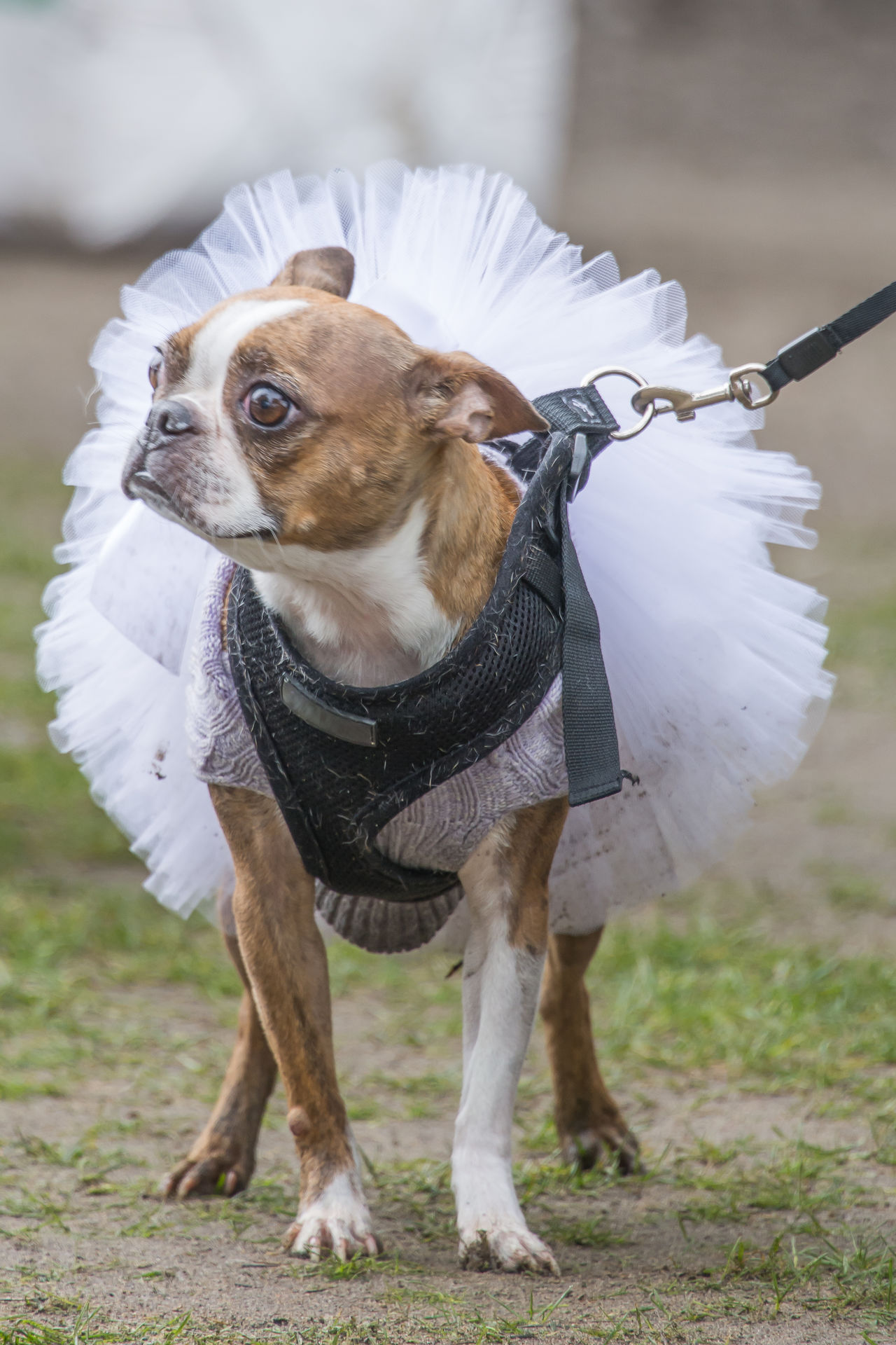 Animal Themes Close-up Day Dog Domestic Animals Mammal No People One Animal Outdoors Pets