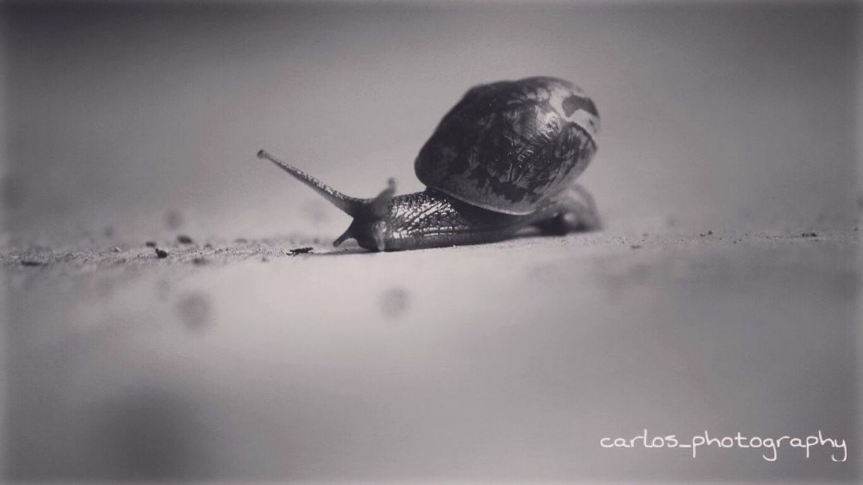 Be fast, 😬 Cheese! Respect Torbo Followme Tag Likes Snail🐌 Phtotography Lovephotography