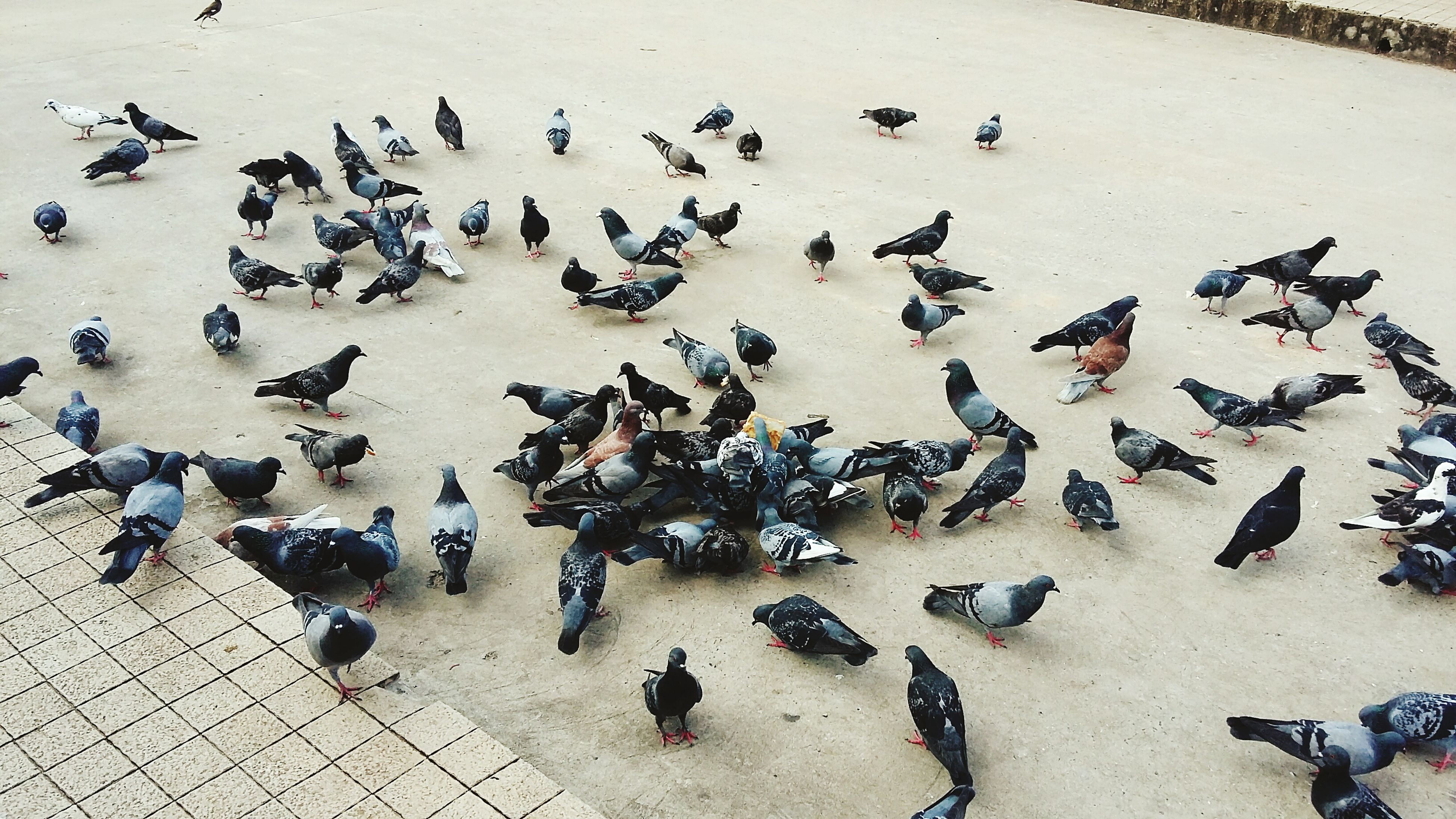 bird, animal themes, animals in the wild, large group of people, togetherness, city, high angle view, wildlife, vertebrate, standing, pigeon, flock of birds, full length, flying, town square, city life, zoology, day, crowd, tranquility, outdoors, nature, pedestrian walkway