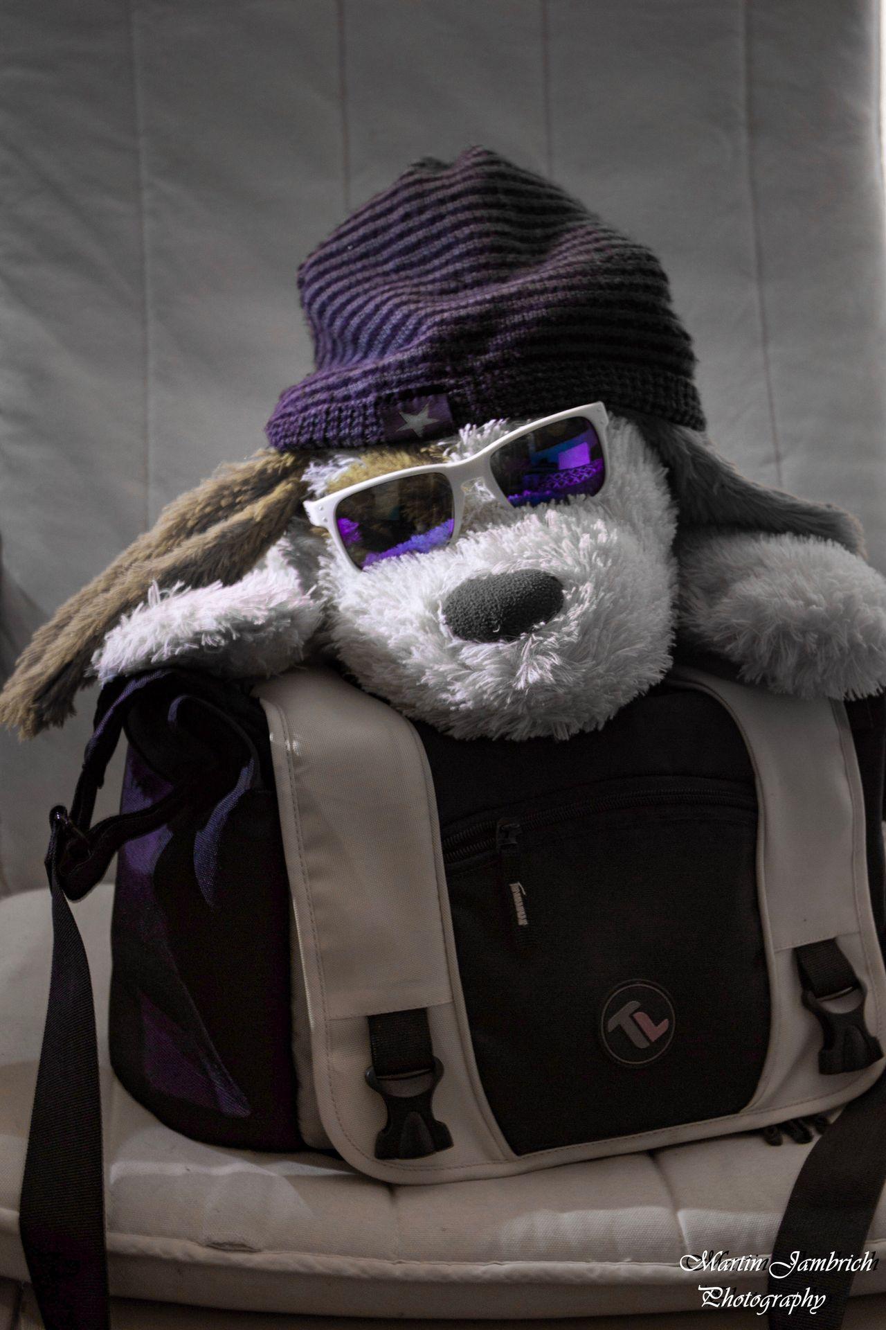 Shotjust for funCostumeeIndoors sNo PeopleeClose-uppMammallDayyToyyToyss Studio Shot Fun Funny Funny Faces Puppy Dog Toy