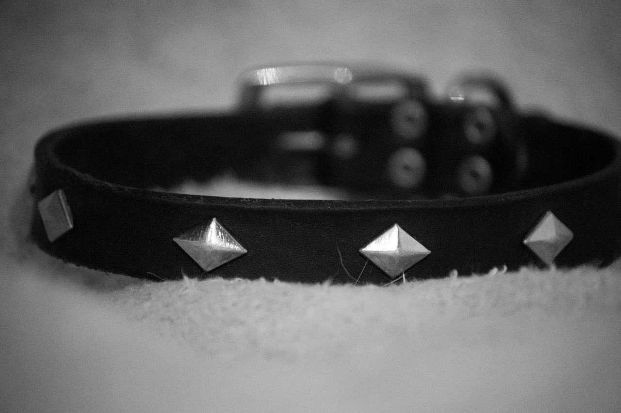 In memory of my dog and friend, Dude, who I recently lost. Close-up Collar Day Dog Dog Bed Dog Collar Indoors  No People Studded Studded Collar