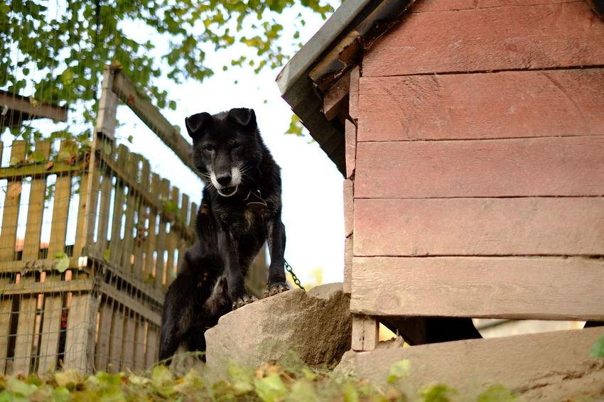 Barking Barking Dog Dog Keeper Watch Watch Dog Watch Dog At Work