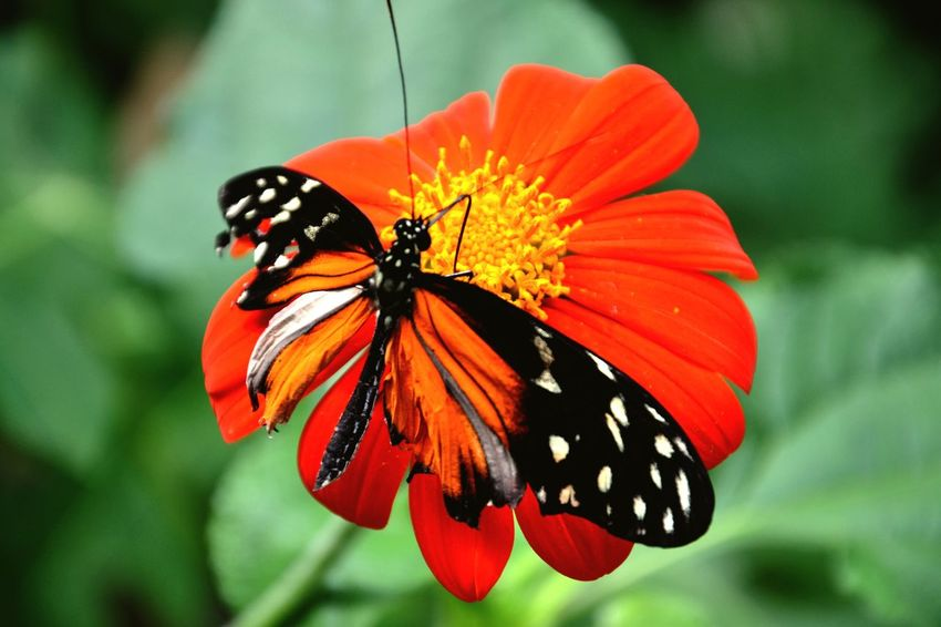 Butterfly Nature Beautiful World Details Littlethings Taking Photos Photography Amsterdam Artis
