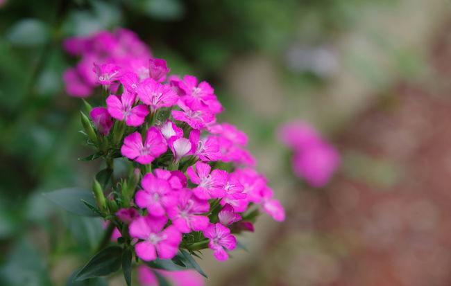 名前わからないけど綺麗だったので🎵 Flowerporn Nature Photography Flower Collection Flower あじさいの杜 二本松寺
