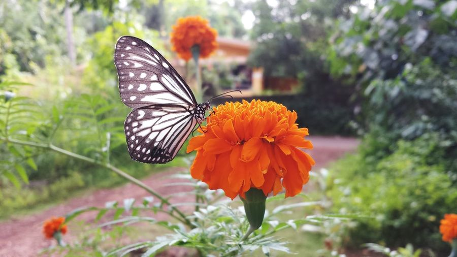 Butterfly Flower Photography Flowers, Nature And Beauty Nature Photography Nature_perfection Nature_ Collection  Flower Collection