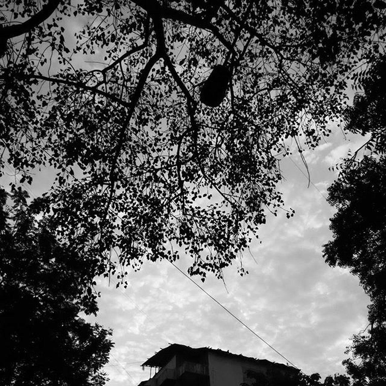 Morningclicks Amazingsky Clouds Justperfect LoveNature Beautifulview Black Instaclick Instamood College ...