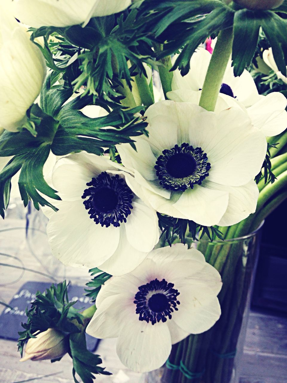 Close-Up Of White Anemone Flowers In Vase