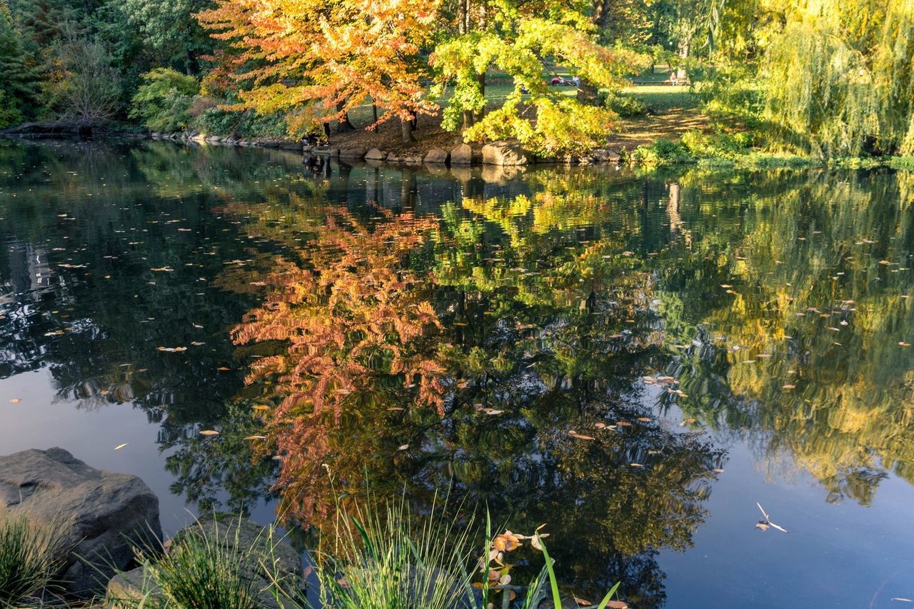 water, reflection, leaf, nature, autumn, lake, tree, change, standing water, beauty in nature, no people, outdoors, day, tranquility, waterfront, growth, plant, scenics, swimming, lily pad, animal themes