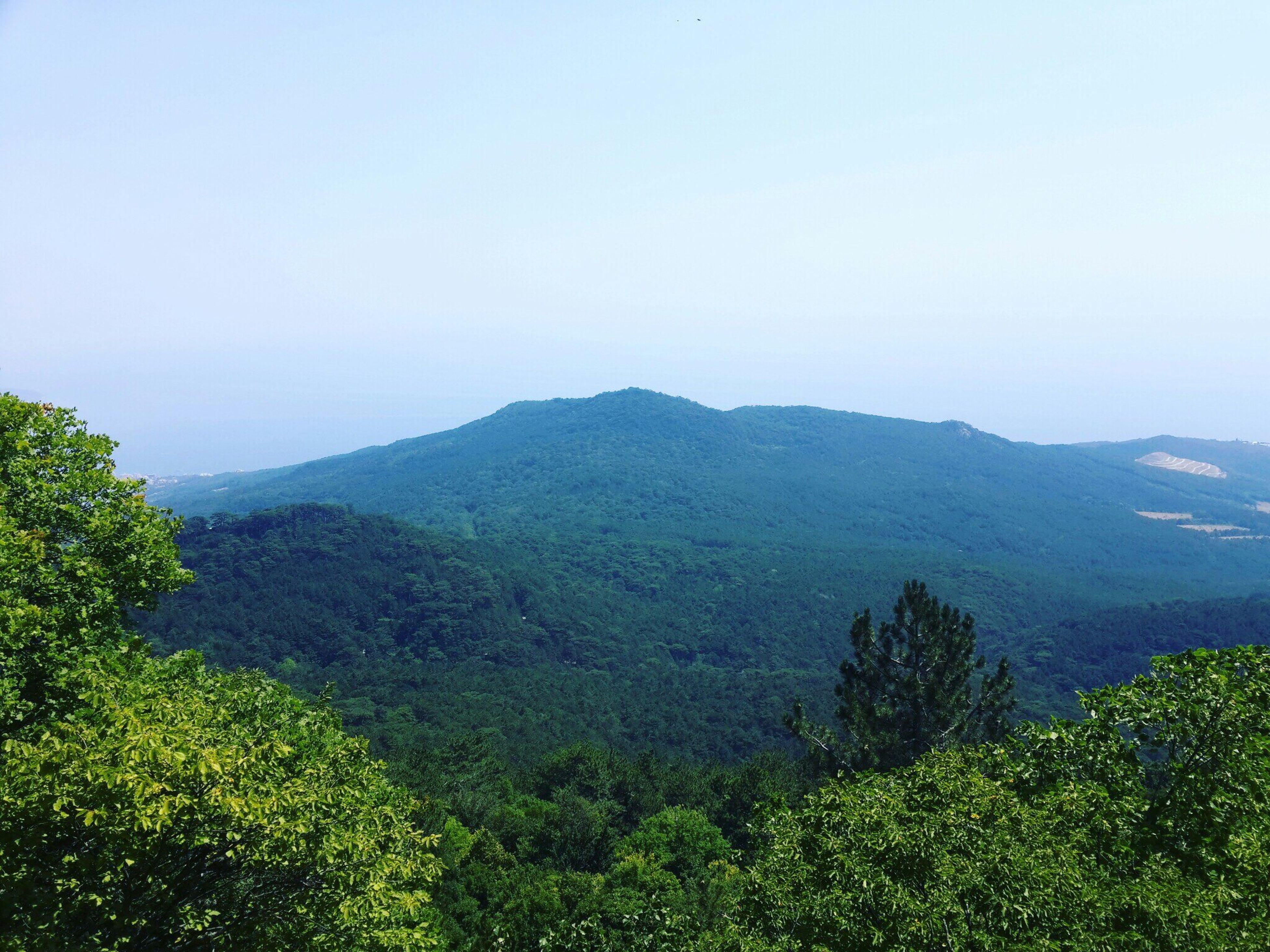 mountain, tree, scenics, tranquil scene, copy space, clear sky, tranquility, beauty in nature, mountain range, nature, growth, non-urban scene, green color, lush foliage, blue, day, majestic, outdoors, treetop, no people, sky, distant, green, valley, vacations, remote, tourism, mist