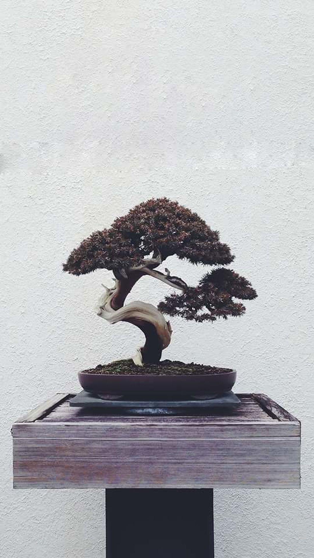 -Fotográfo desconhecido Bonsai New Life Small Tree ❤