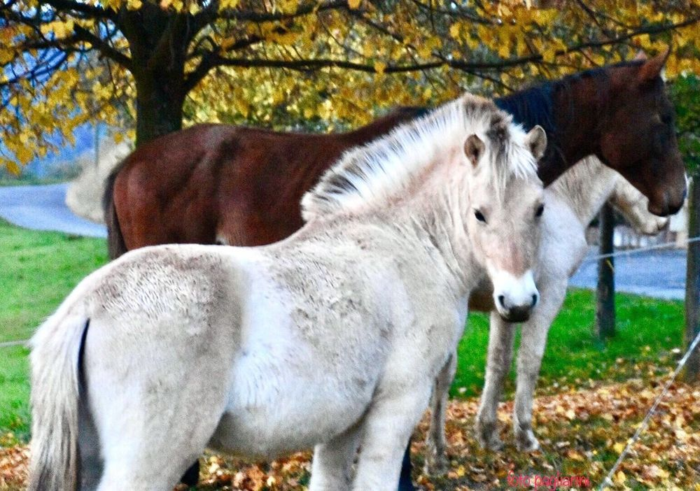 Animal Themes Domestic Animals Horses Horse Photography  No People Horse Life Autumn Collection Nikonphotographer Naturephotography EyeEm Best Shots - Nature EyeEm Best Shots Irgendwo In Deutschland 🎬 Somewhere In Germany 🎬 Nature On Your Doorstep Landscape_Collection What Who Where