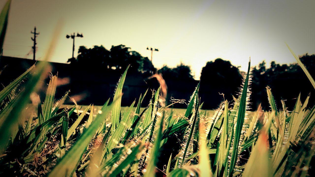 Campo de futebol da minha escola. Green Moment Beautiful Day Naturaly & Perfect