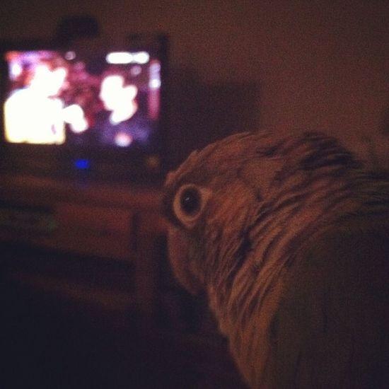 Olympics Bird Greencheek Watching funny