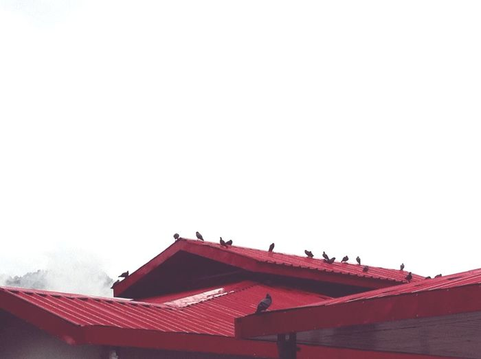 cold winter mornings Winter Red Roofs Pigeons Winter Morning Misty Foggy