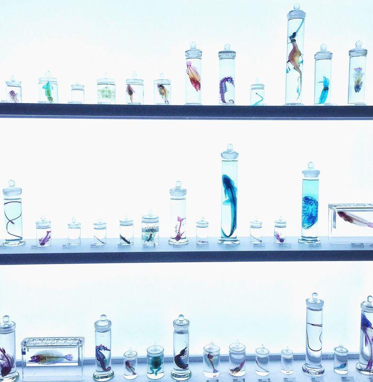 Transparent Specimen Transparent Specimen ArtWork Artistic Exploring Tranceparent Specimen Aqua Planet JEJU ISLAND  Exploring Nature Unique