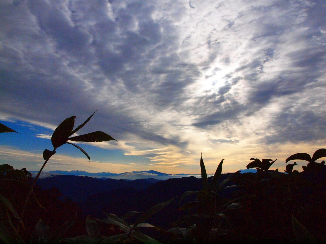 Hakusan Sky Mountain Sunlight Flowers