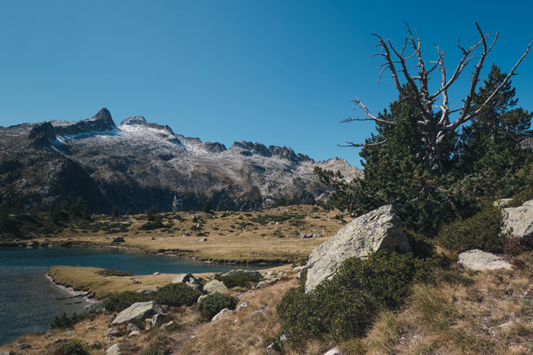 Lake, dead tree and rocks in the Neouvielle massif, french Pyrenees France Pyrenees Beauty In Nature Clear Sky Day Landscape Mountain Nature Neouvielle No People Occitanie Outdoors Plant Rock - Object Scenics Sky Tranquil Scene Tranquility Tree
