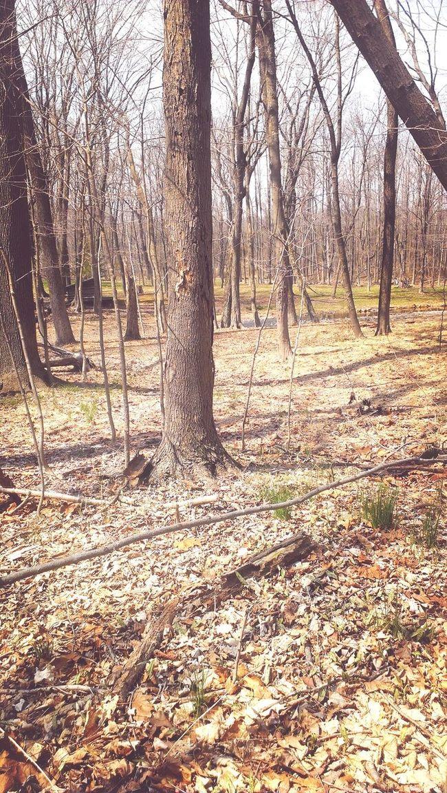 Woods First Eyeem Photo