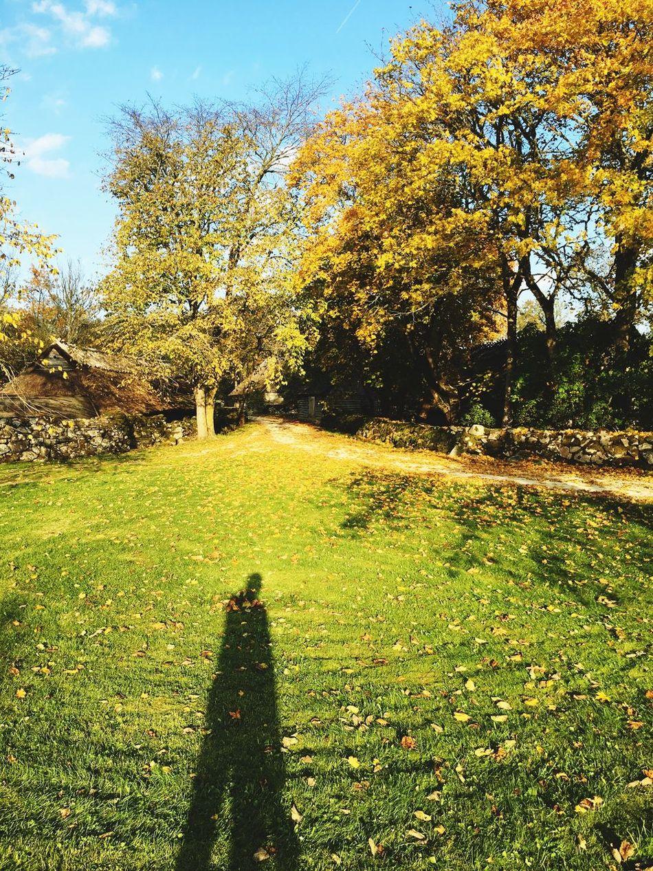 Autumn Shadow Couple Trees Baltics2k16