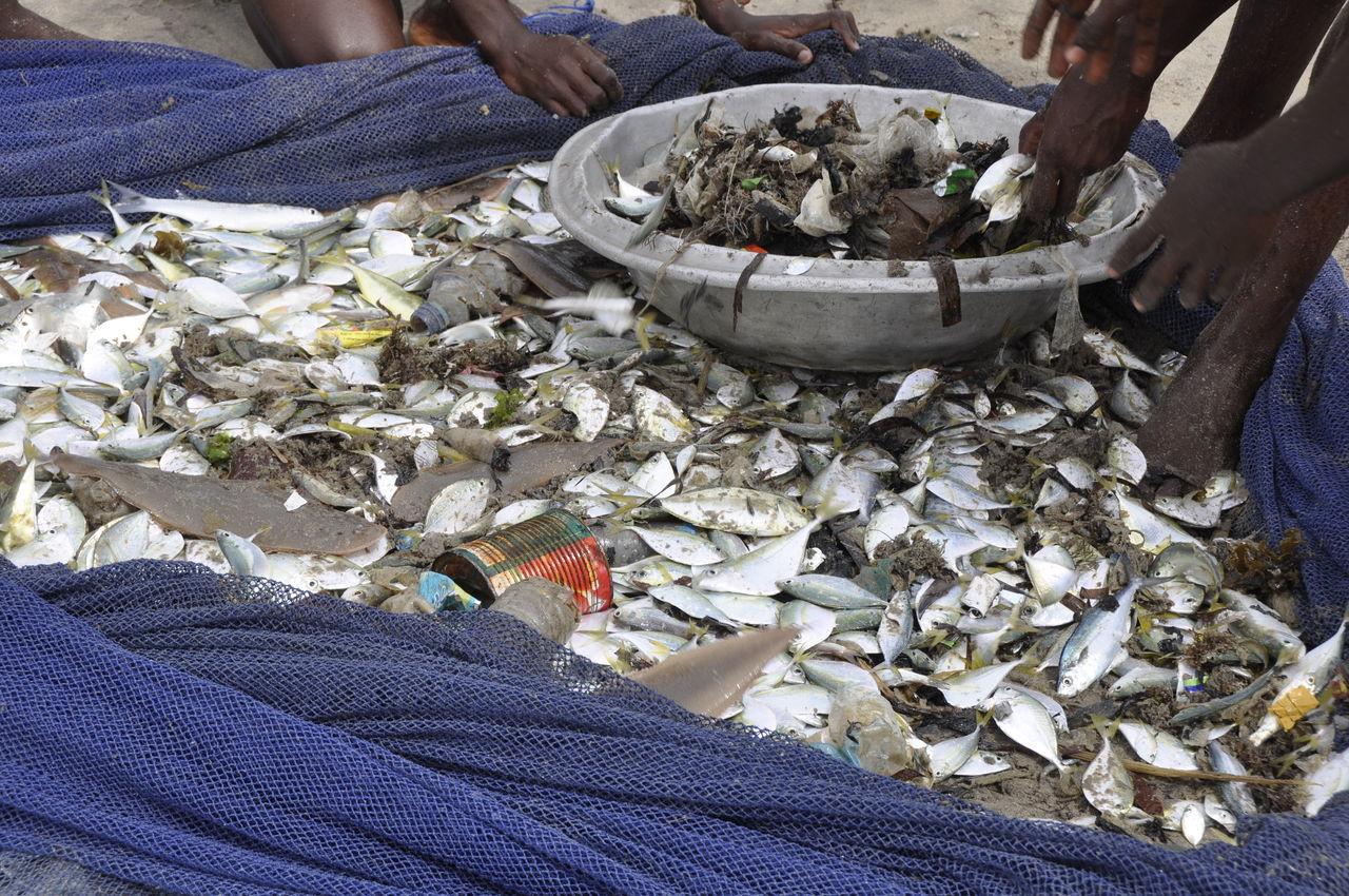 Environment Environmental Pollution Fish Fishing Fishing Net Fishing Village Food Plastic Trash Plastic Waste Pollution Poor People  Poverty Sea Sea Pollution Third World Third World Country Trash Ghana Central Region