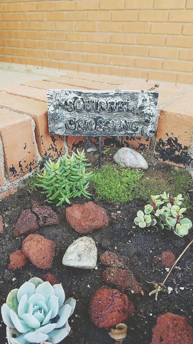 Garden Photography Cactus Garden Cactusporn My Cactus Garden Check This Out