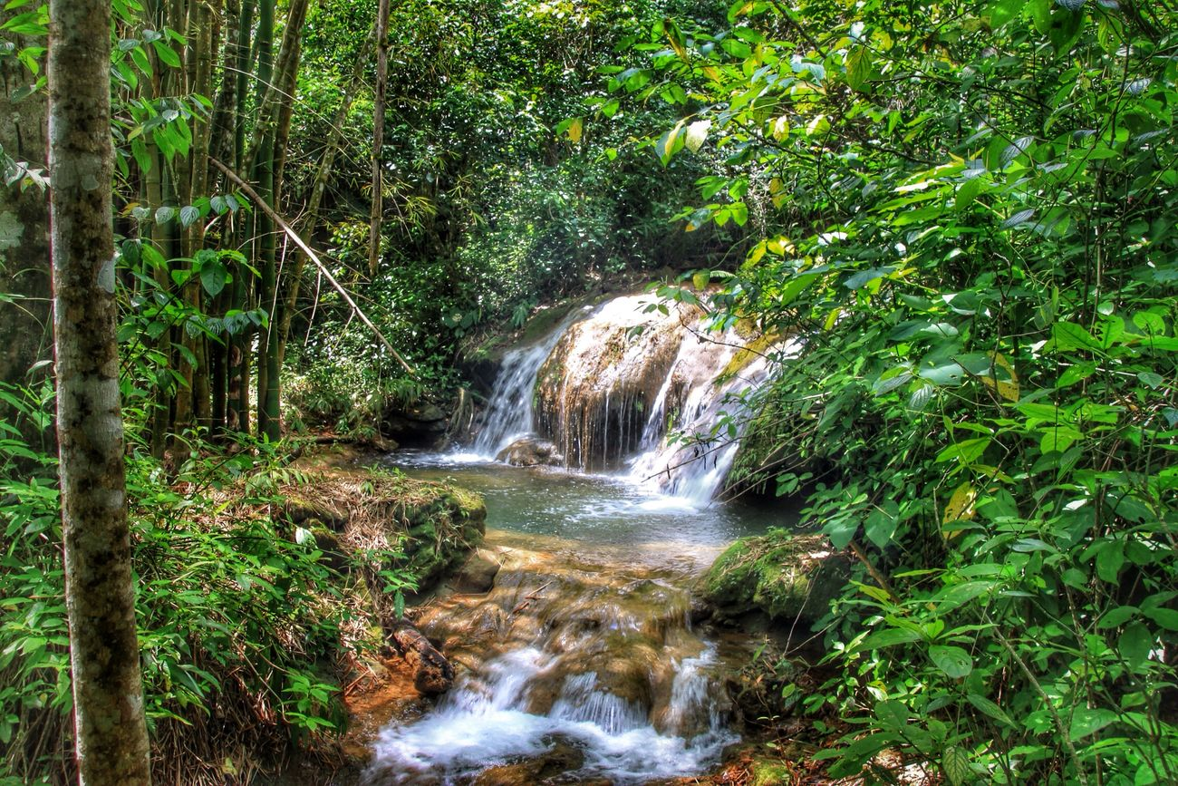 Waterfall in the jungle Beauty In Nature Flowing Flowing Water Forest Freshness Green Color Long Exposure Motion Nature No People Outdoors Power In Nature Rainforest Rapid River Running Water Scenics Stream - Flowing Water Tranquil Scene Tranquility Travel Destinations Tree Water Waterfall Waterfront