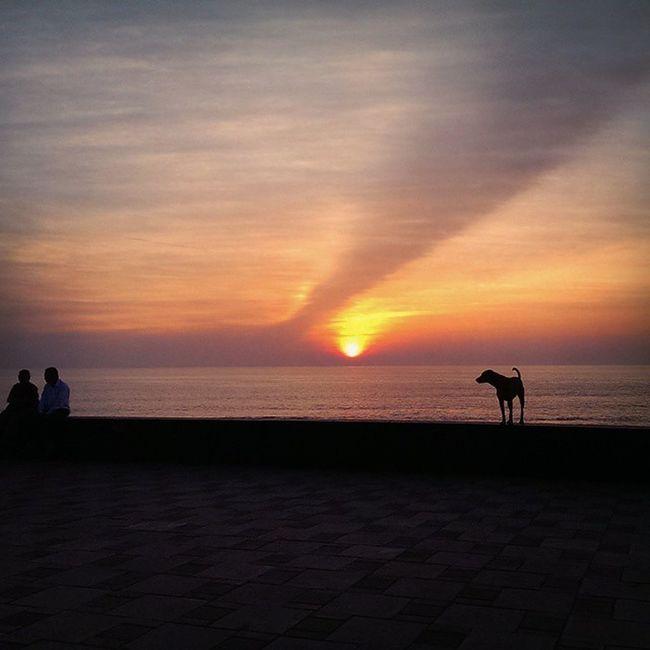 Doggy boy feeling J.... Dog Doglover Dogsofinstagram Couple Sunset Sunrise Sunrays Beach Shadesofnature Colorsofnature Colorsofthesky Fiftyshades_of_twilight Fiftyshades_of_nature Mumbai HumansofMumbai y not DogsofMumbai Coast Water Arabiansea Sea Seashore