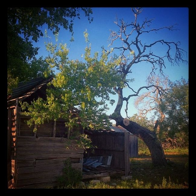 #abandonedhouse #oldhouse #oldtree #tree Day Nature No People Outdoors Tree Tree Trunk