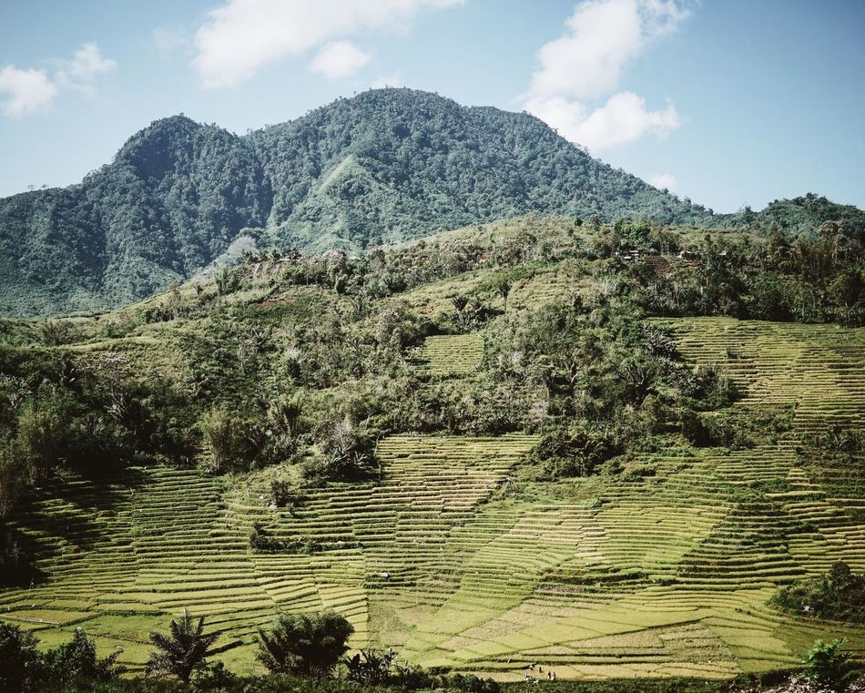 Flores INDONESIA Southeastasia Nusa Tenggara Timur Flores Mountain Tree Tranquil Scene Scenics Beauty In Nature Nature Non-urban Scene River Rice Field Rice Paddy Growth (null) Agriculture Outdoors Mountain Range No People Green Color Palm Trees Landscape Traveling Beautifully Organized