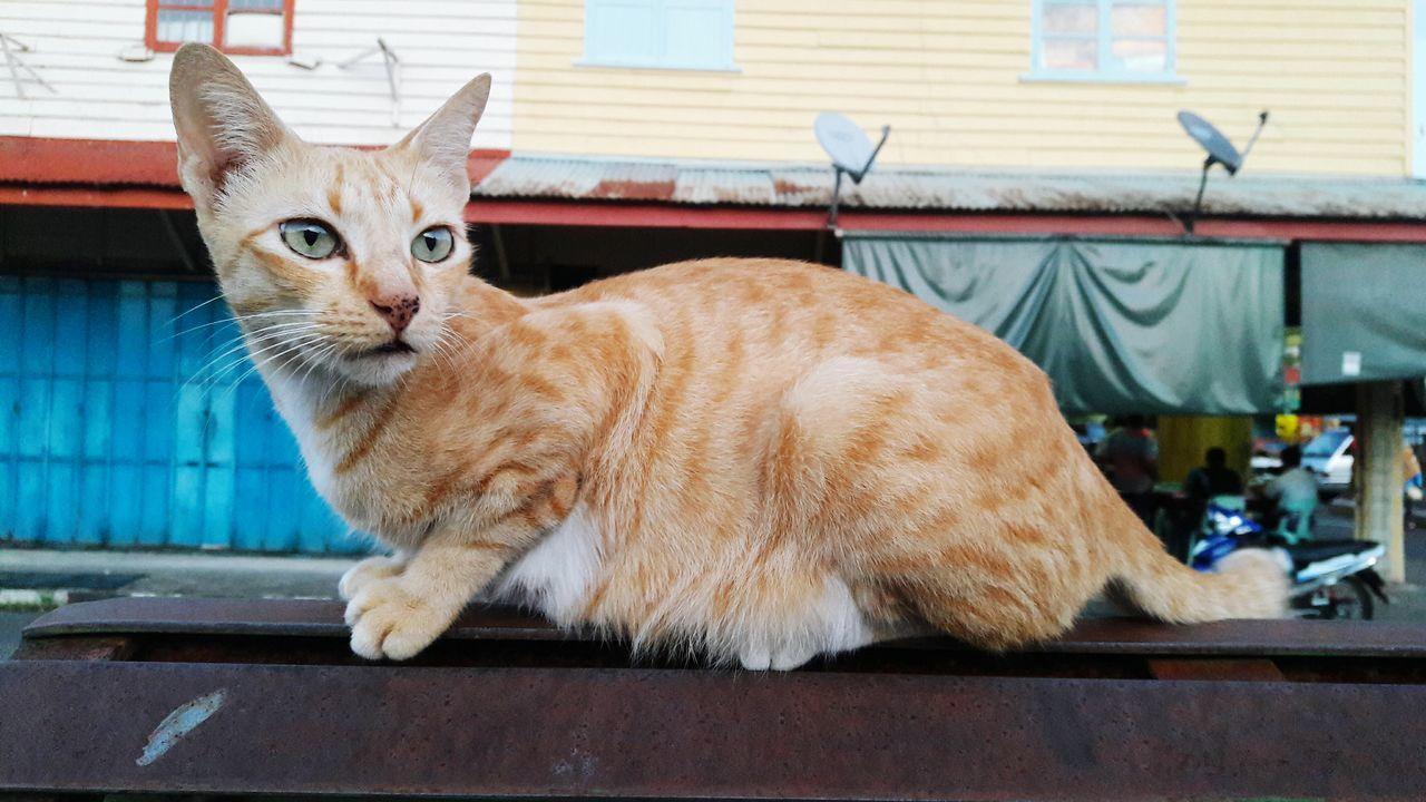 Street Cat Cat Instinct