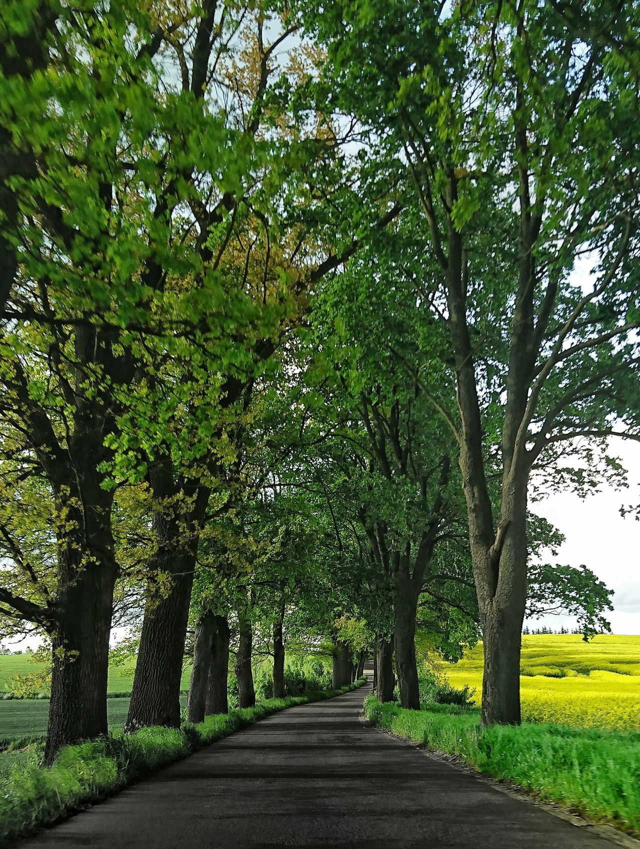 Warmia Poland Polska Xperiaxz Beauty In Nature No People Tree The Way Forward Nature Outdoors Green Color Tranquility Beauty In Nature Landscape Scenics Sky Road Road Trees