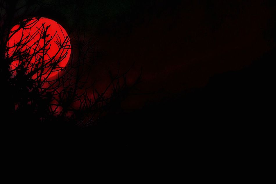 Silhouette Moon Night Outdoors Bare Tree No People Sky Nature Tree Bird Astronomy Capture The Moment EyeEm Nature Lover Eye4photography  Taking Photos Check This Out Day From My Point Of View TCPM Tranquility Scenics No No People